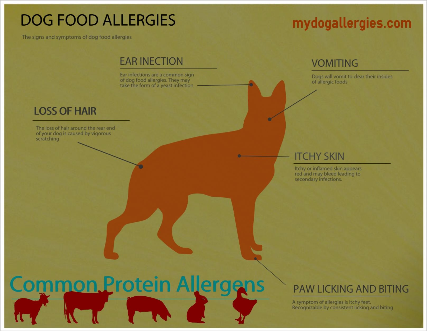 Dog Allergy symptoms | My Dog Allergies | Pinterest | Dog allergy ... | Dog Food Allergies Ear Infections