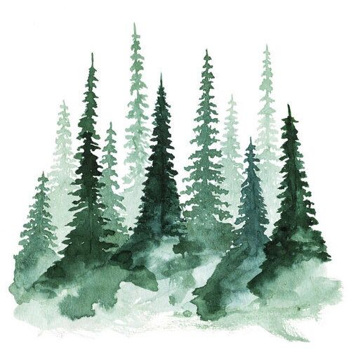 Watercolor Art Of Pine Trees Watercolor Artwork Watercolor