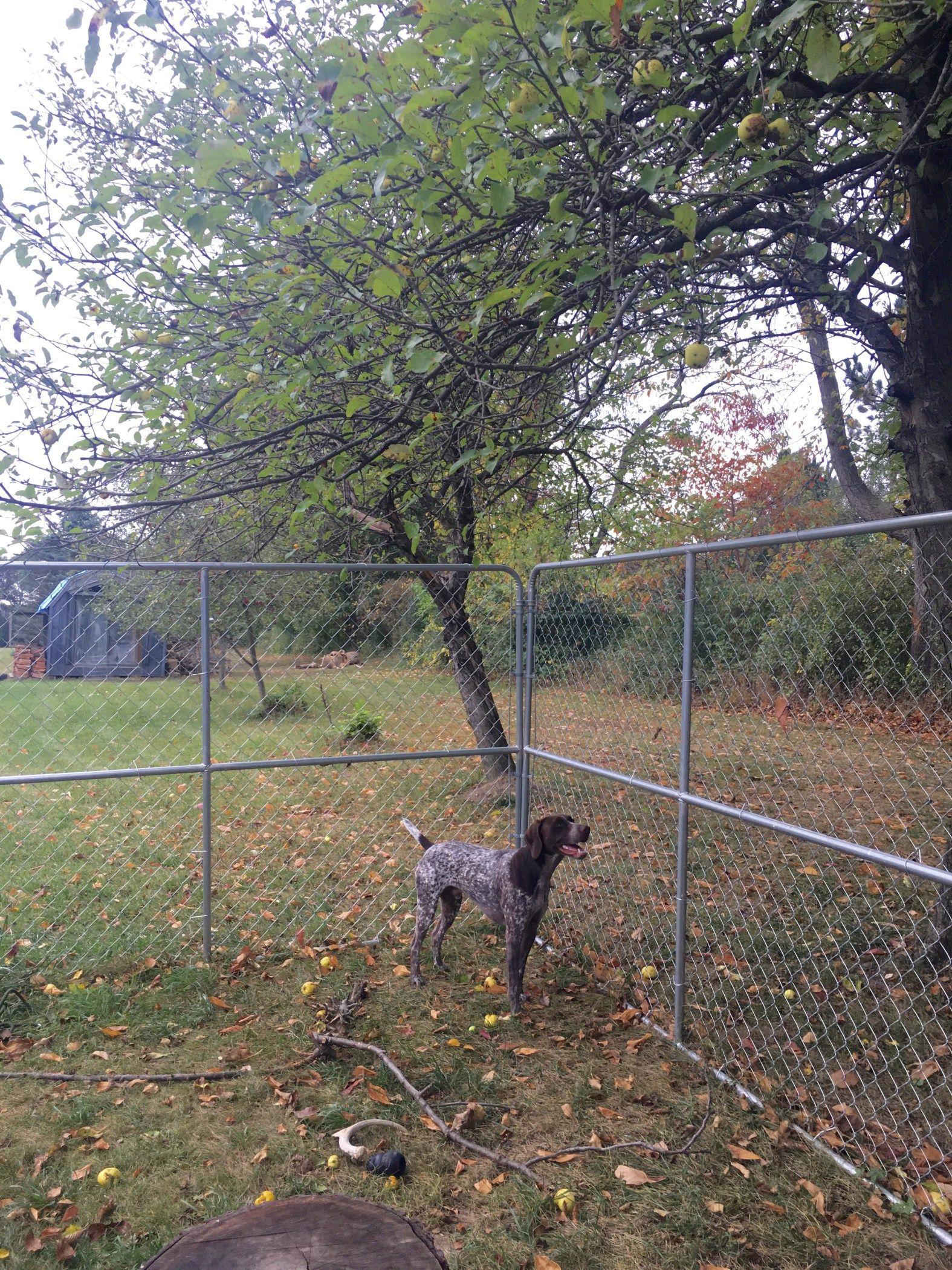 Diy indooroutdoor dog kennel building a dog kennel diy