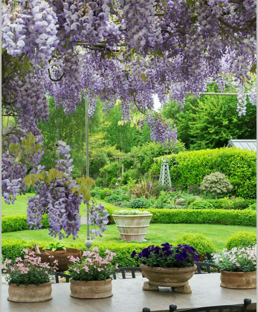 Beautiful Gardens Pretty Flowers Wisteria Therapy Peace