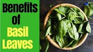 Benefits of Basil Leaves