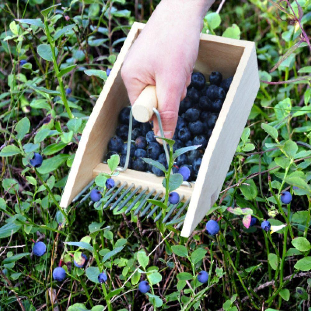 Beerenpflucker Gardening For Beginners Vegetable Garden For Beginners Flower Garden