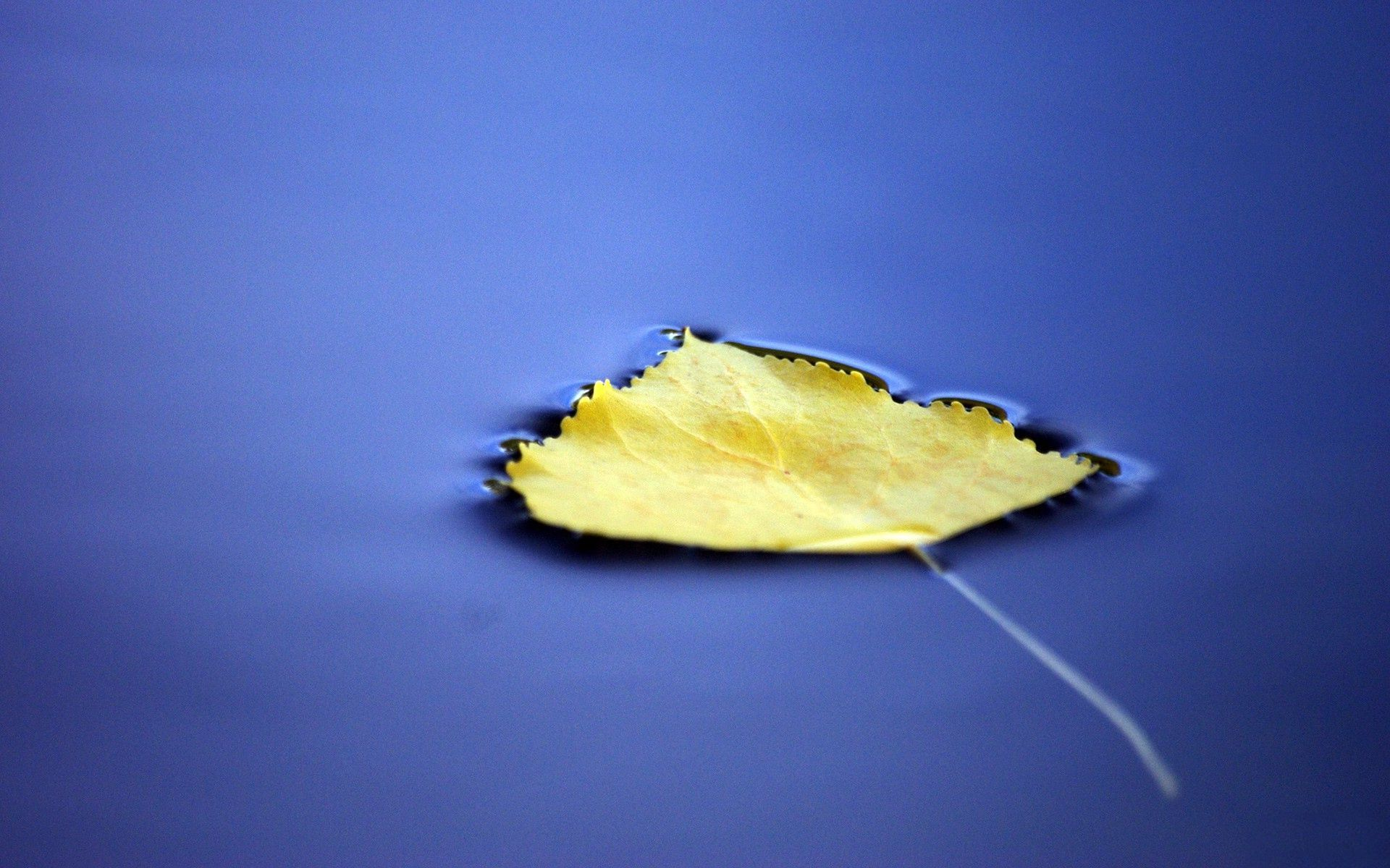 Autumn Leaves On The Water Royalty Free Stock Images Image