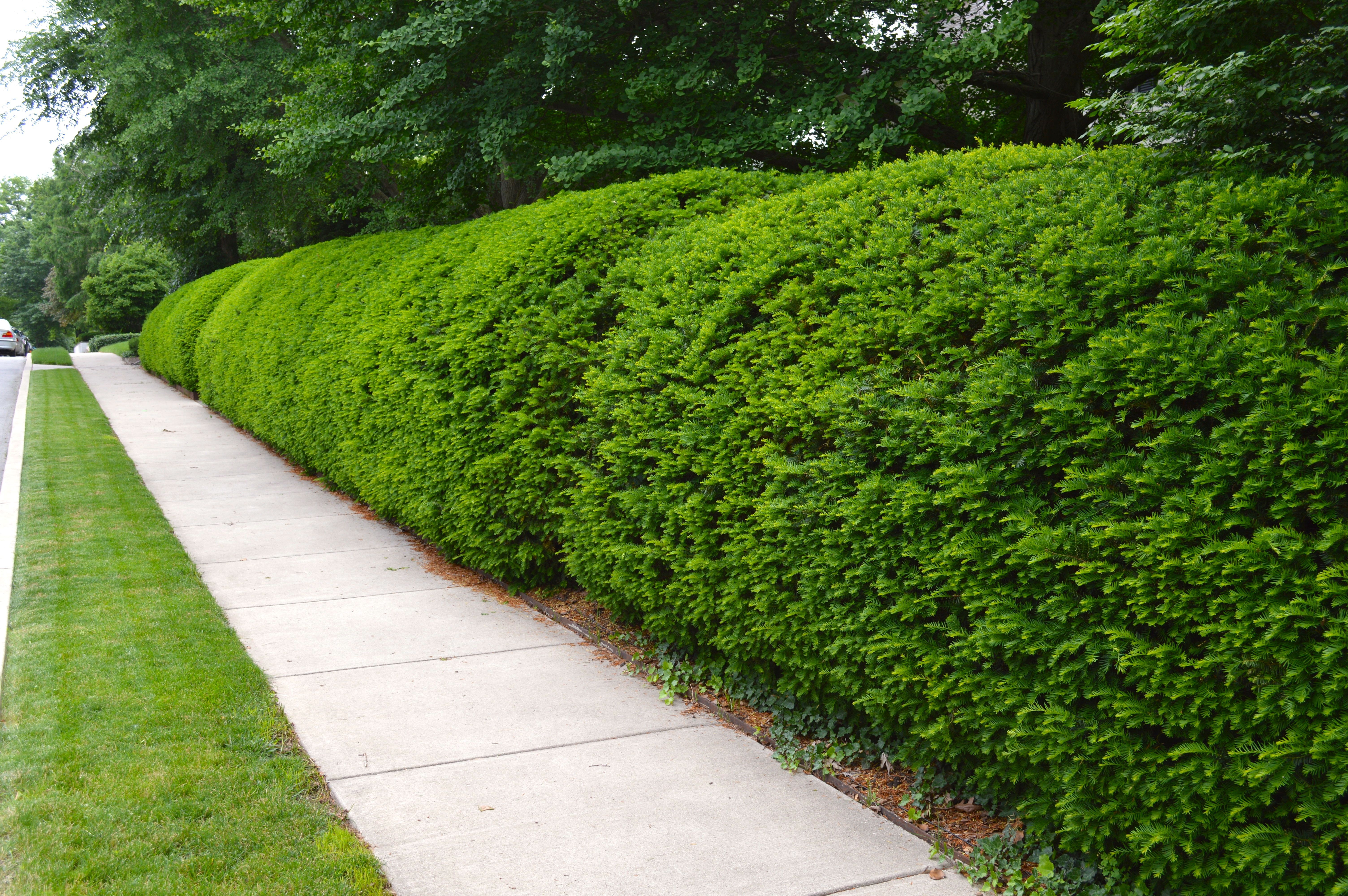 Shrub Trimming Clean Cut Tree Experts Is One Of The