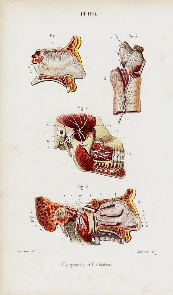1843 Antique ANATOMY print, NEUROLOGY, NEUROSURGERY, nerves and ...
