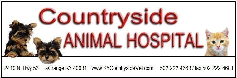 Entrusting Your Pet To A Dog Kennel In Lagrange Emergency Animal Hospital Lagra Entrusting Your Pet To A Dog Kennel In Lagrang Cheap Dog Kennels Dog Clinic Dog Kennel Cover