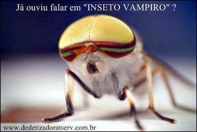 CONHEÇA O INSETO VAMPIRO. www.dedetizadoratserv.com.br