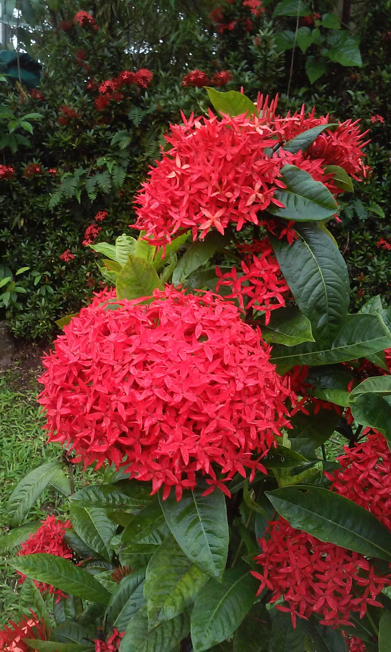 Pin by Robert Hayes on Flowers of Costa Rica Flowers