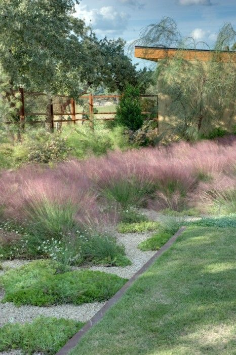 texas hill country landscape design pink muhly grass silver phony rh pinterest com