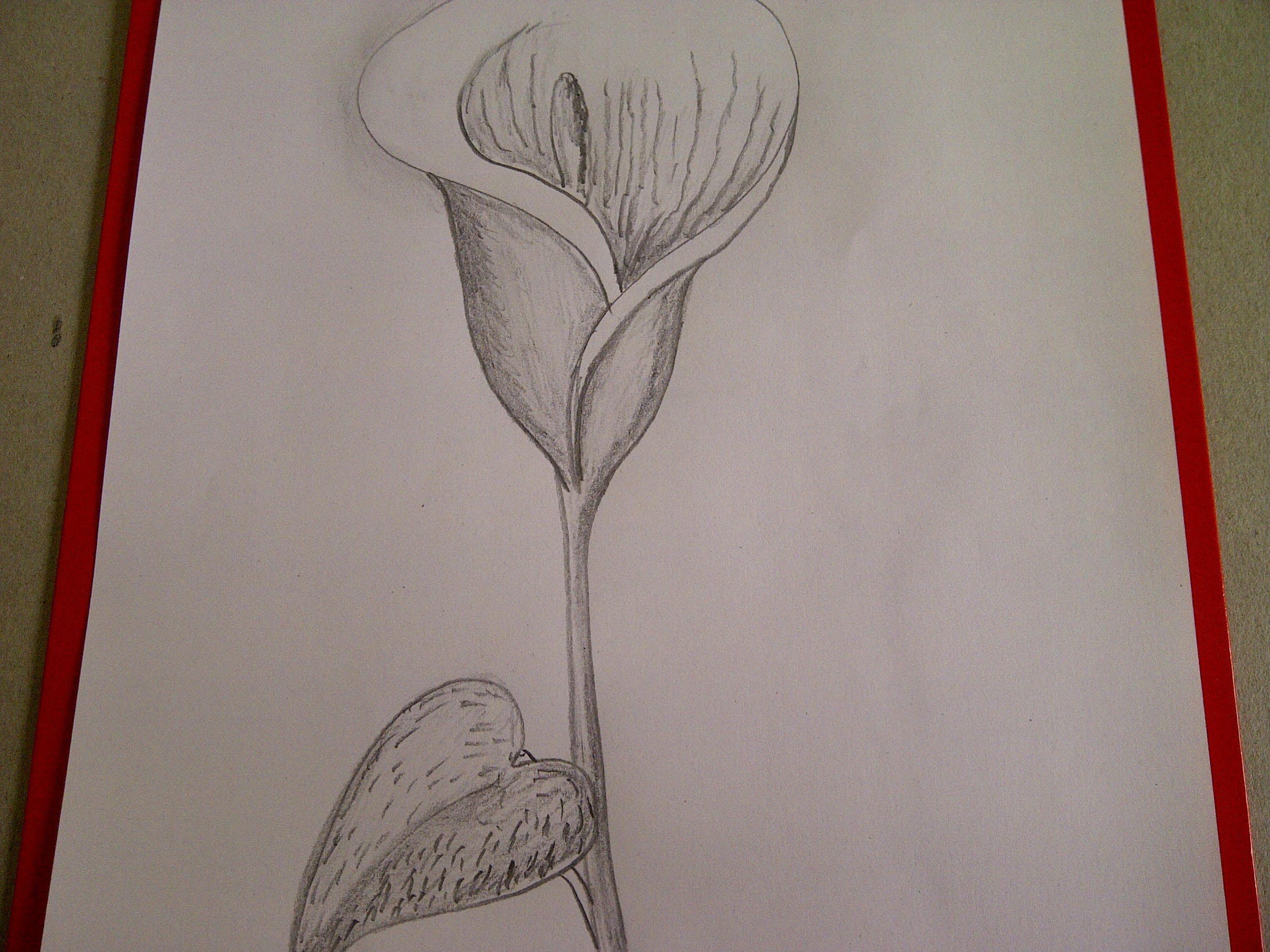 Como Dibujar Flores Como Dibujar Una Cala Alcatraz Lirio De Agua Youtube Como Dibujar Flores Dibujos De Flores Pintura De Lirio