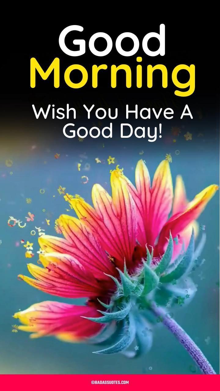 Beautiful Good Morning Wish Video & Gif