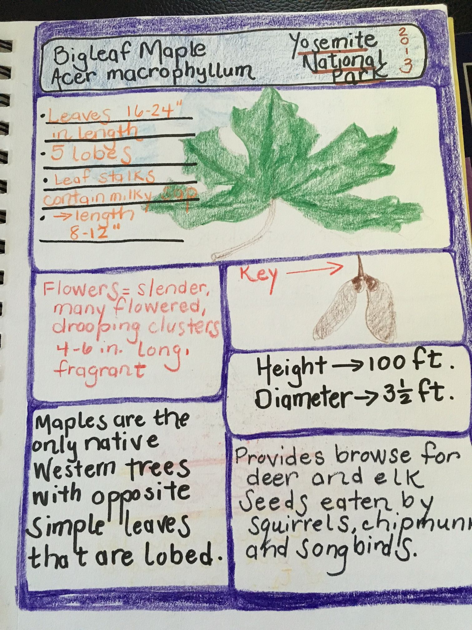 Once a Month Nature Journal Project - Draw Parts  I drew the