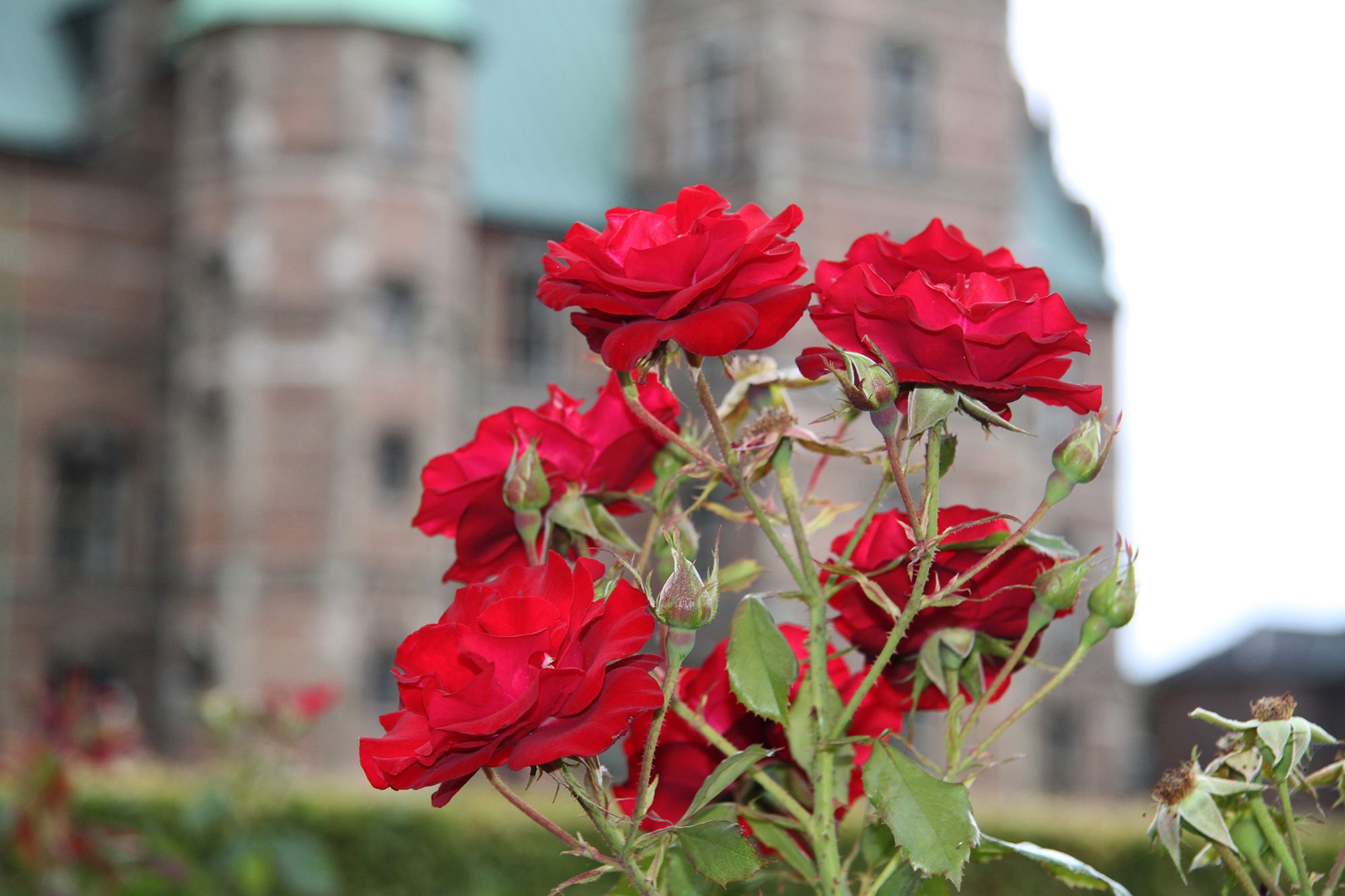 In Christian symbolism, the rose stands both for innocent religious love and passionate love, and one might say this reflected the intentions of the warlike and love-seeking king.  Copyright: Rosenborg Castle / Rosenborg Slot