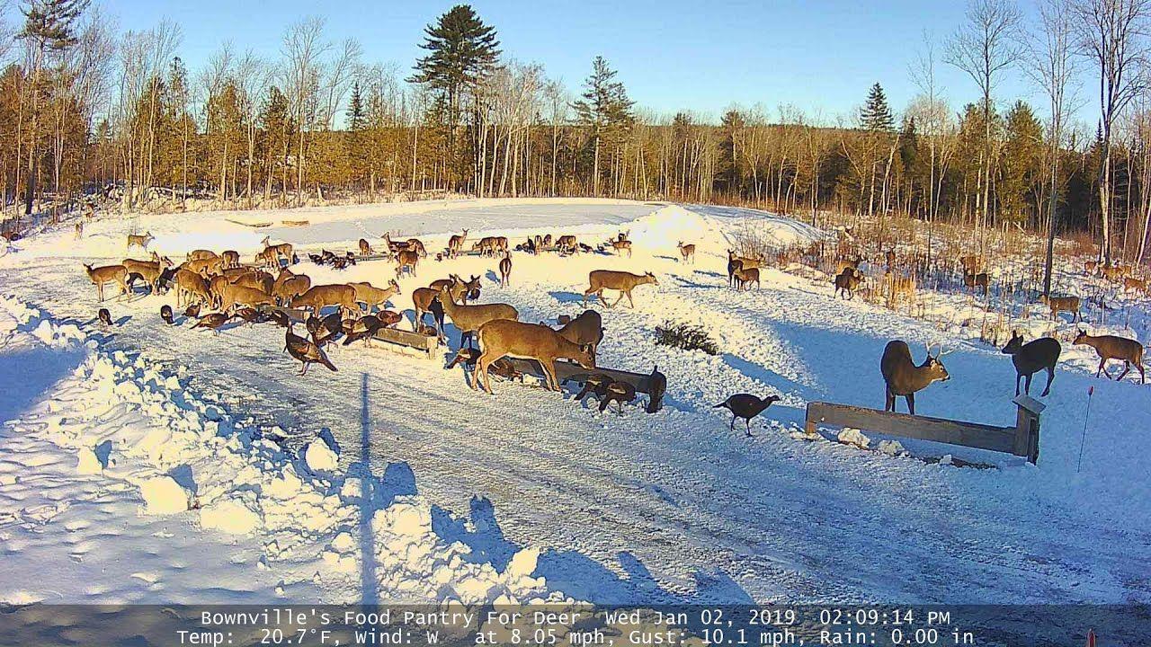 Brownvilles food pantry for deer close view food pantry