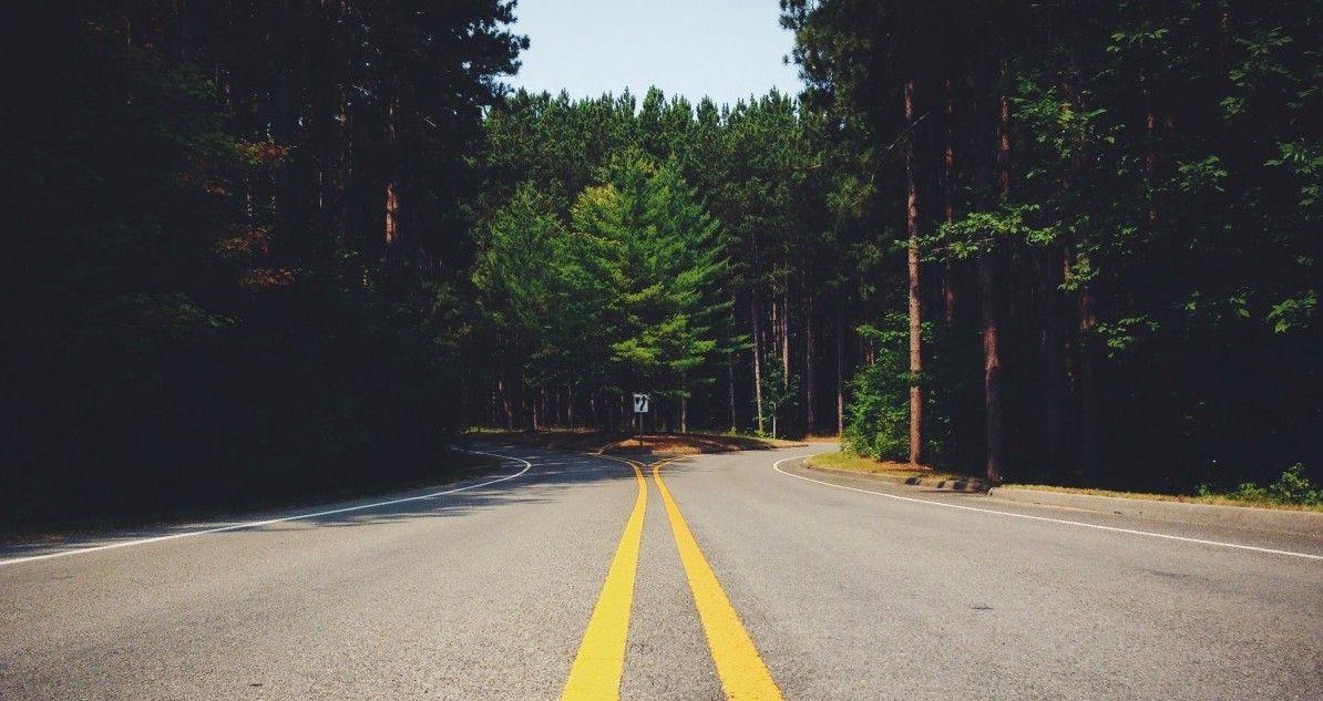 Buzzword der Stunde  Part 2: Von Liane zu Liane von Transformation zur Tranisition
