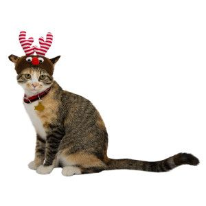 My Bella Buttons Whisker City Reindeer Cat Hat Clothes