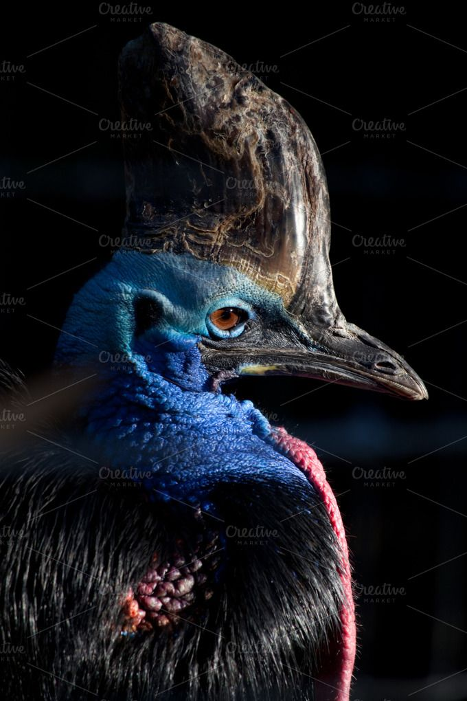 Check out Cassowary by The Quantum Fish on Creative Market