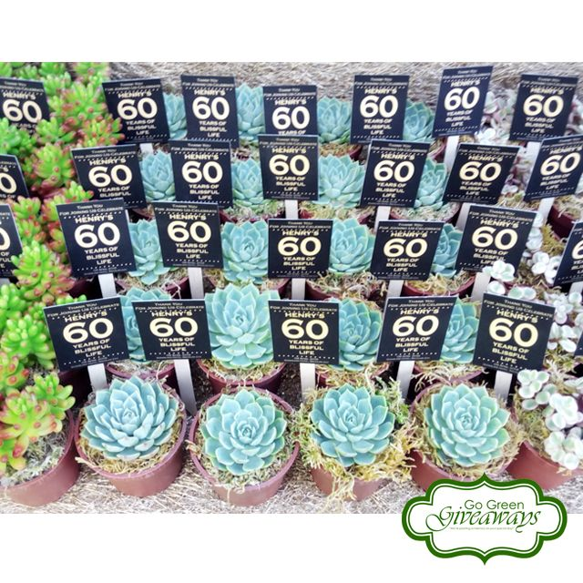 Succulents Giveaways For Henry S 60th Birthday Bacolod