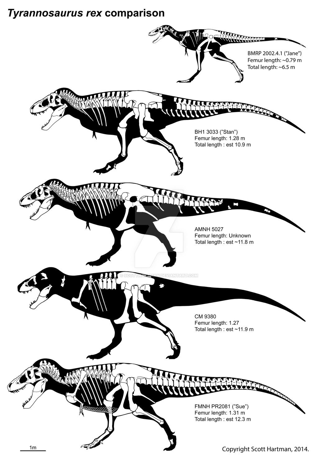 Allosaurus Fragilis Schematic By Randomdinos Fauna Extinta