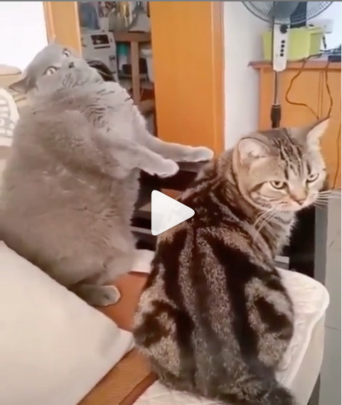 Double Tap And Follow Us Funny Cat Videos Funny Gif Animal Gifs