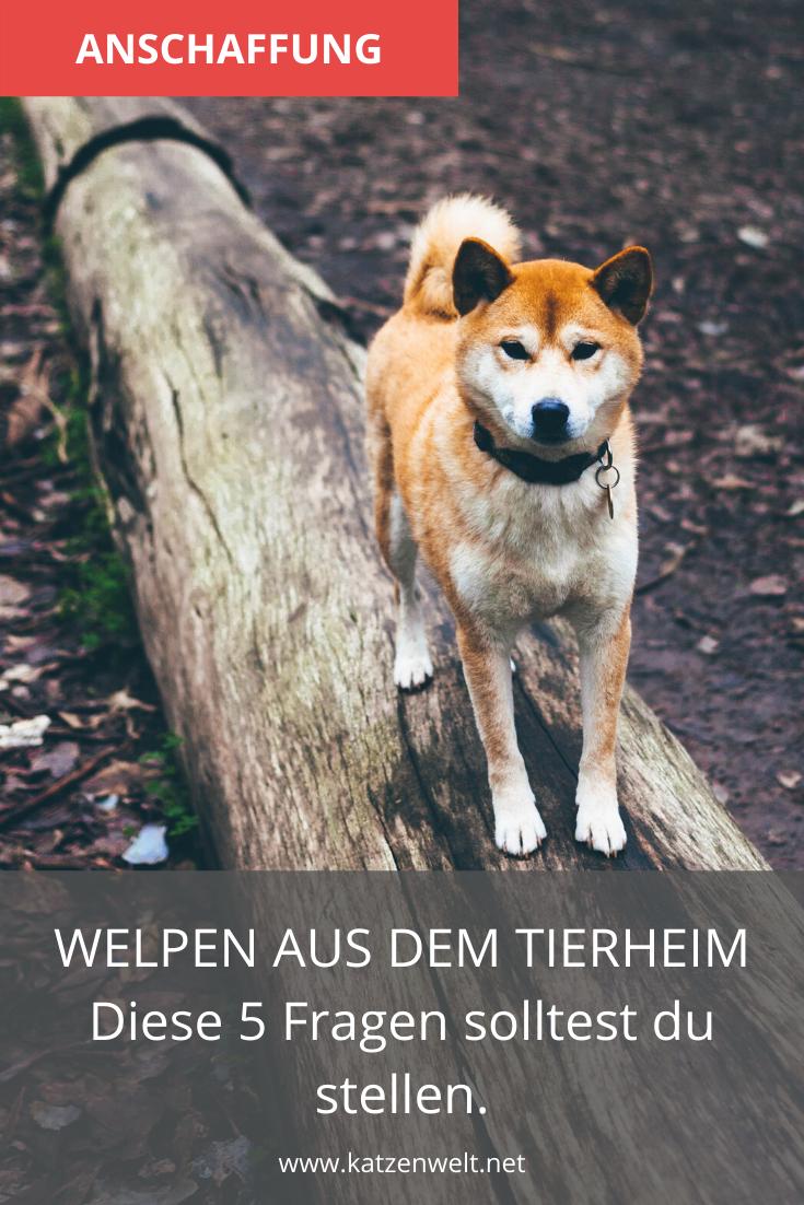 Welpen Aus Dem Tierheim Das Musst Du Im Vorfeld Wissen Und Beachten In 2020