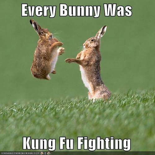 Best Hilarious Funny Memes 4 Cute Funny Animals Funny Animal Pictures Animal Captions