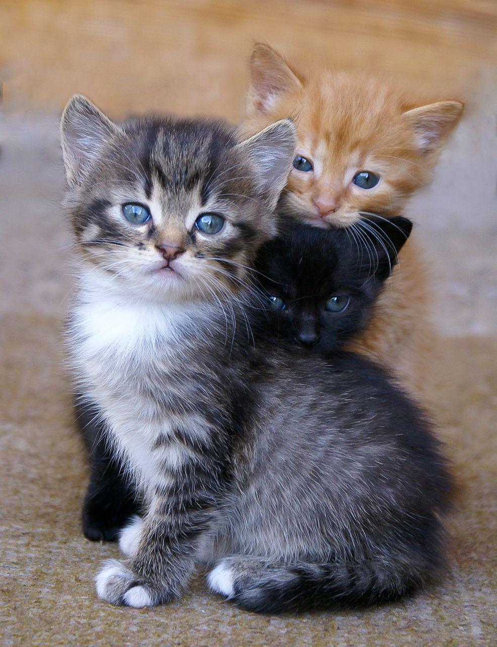een familie poes Katzen, Baby katzen, Niedliche tiere