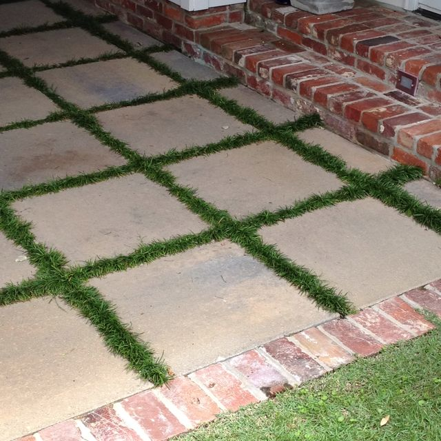 Patio area with monkey grass between pavers for the home for Pinterest patio pavers