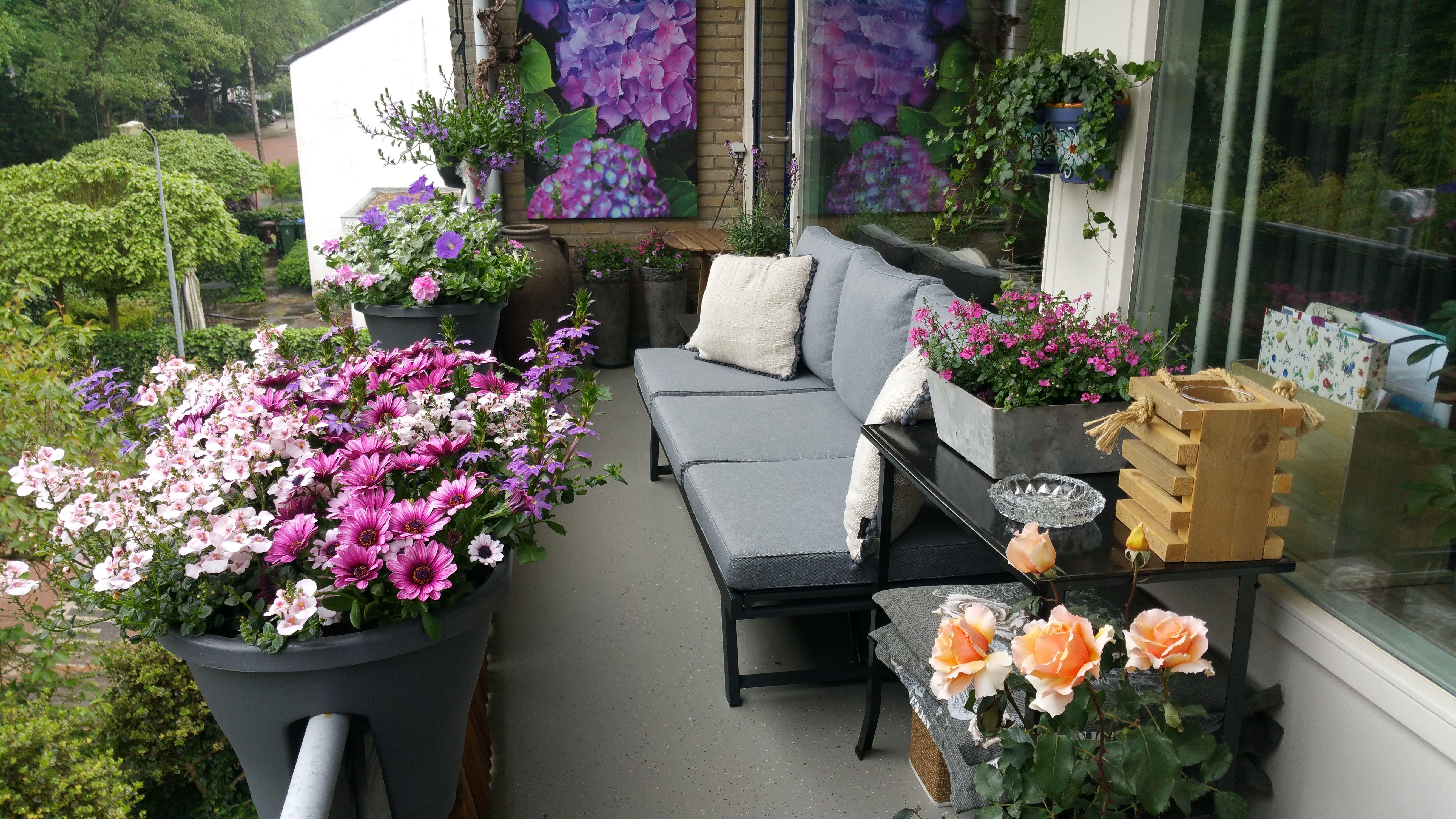 Cottage Tuin Op Het Balkon Veel Planten En Kleurrijke Bloemen Met