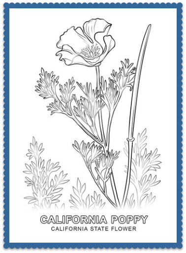 California State Flower California Poppy By Usa Facts For Kids California Poppy Drawing Poppy Coloring Page Poppy Drawing