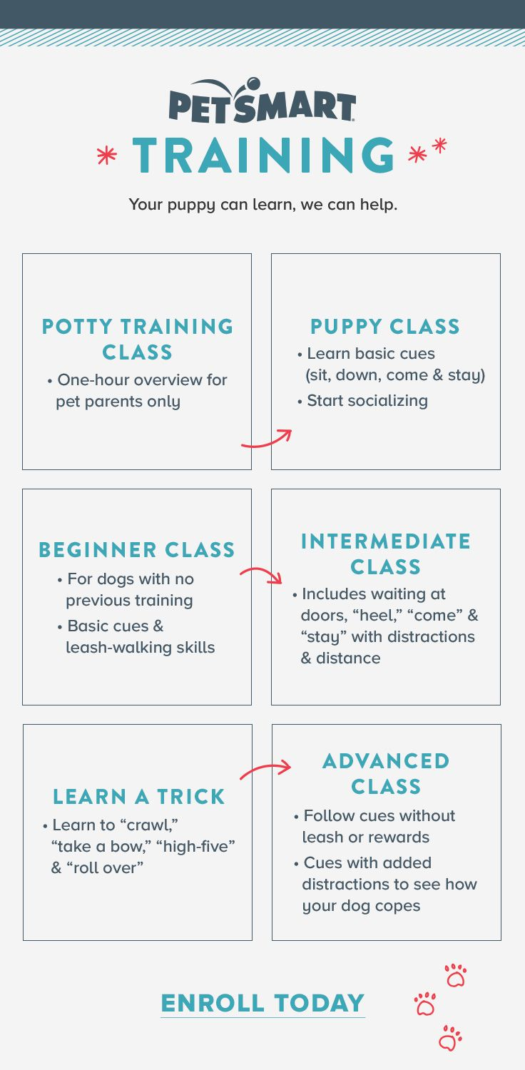Wherever Your Puppy Is At In His Development And Training There S
