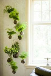 Hanging indoor plants and balcony plants  environmentally friendly house