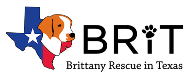 Texas Brittany Spaniel Rescue With Images Rescue Animal