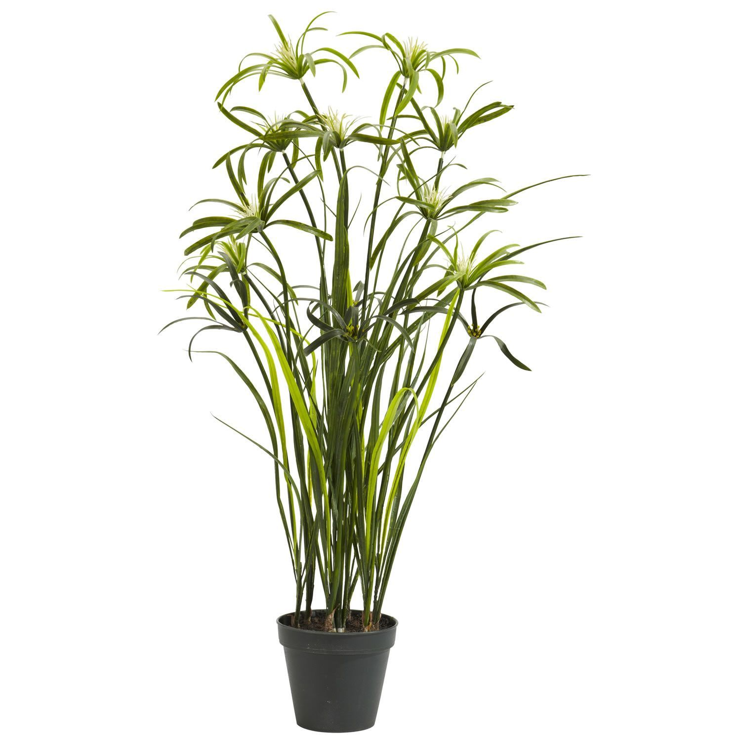 U papyrus silk plant products pinterest silk plants and products
