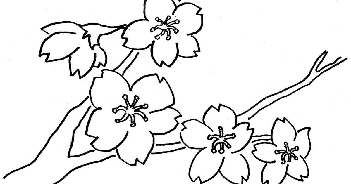 Contoh Gambar Sketsa Bunga Melati Mewarnai Di 2021 Sketsa Bunga Sketsa Gambar Bunga