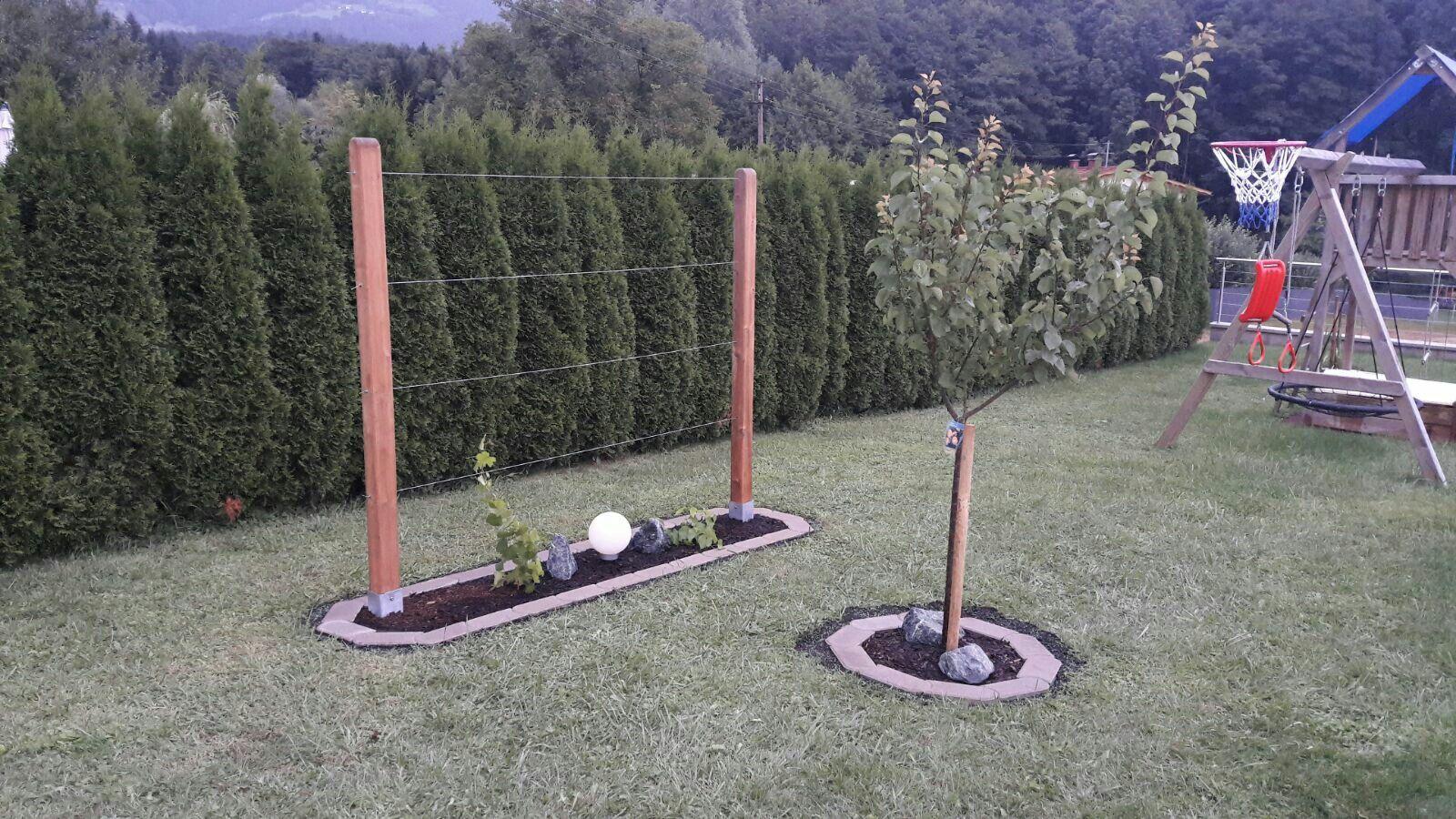 Weinspalier Spalier Weintrauben Garten