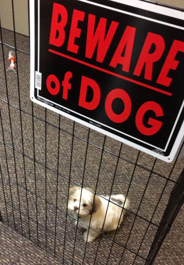 Beware Album On Imgur Beware Of Dog Very Cute Dogs Dangerous Dogs