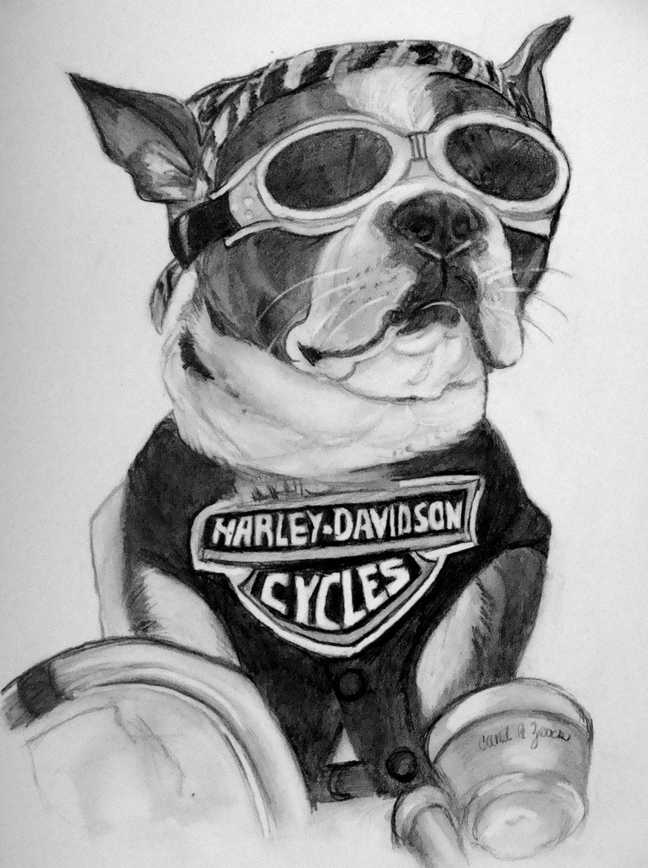 Carol Zeock Original Drawing Harley Dog Drawings Dogs Style
