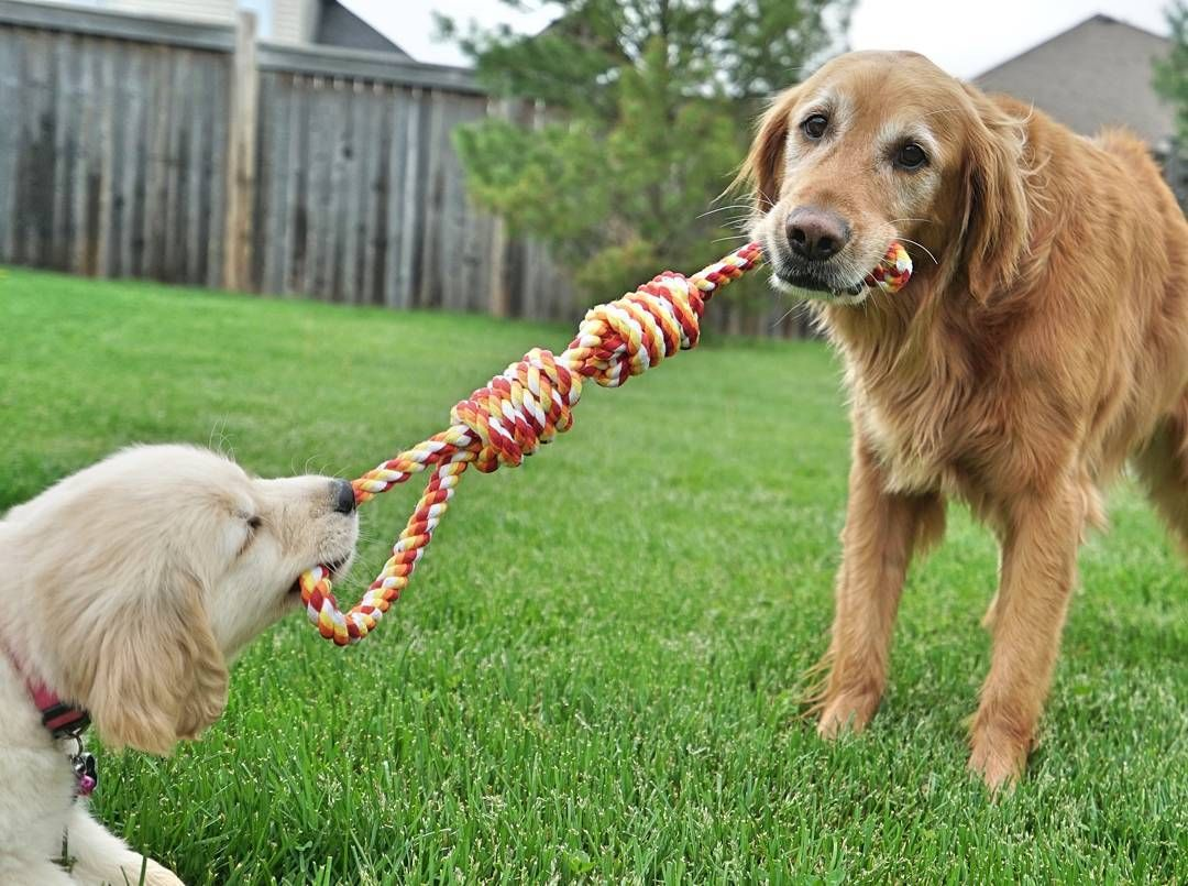 Daisy And Duke Cute Animals Dog Toys Dogs Cute Animals
