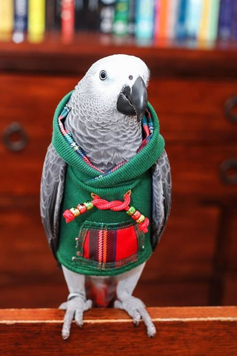 Adorable little Christmas hoodie! Also see Bird Animated