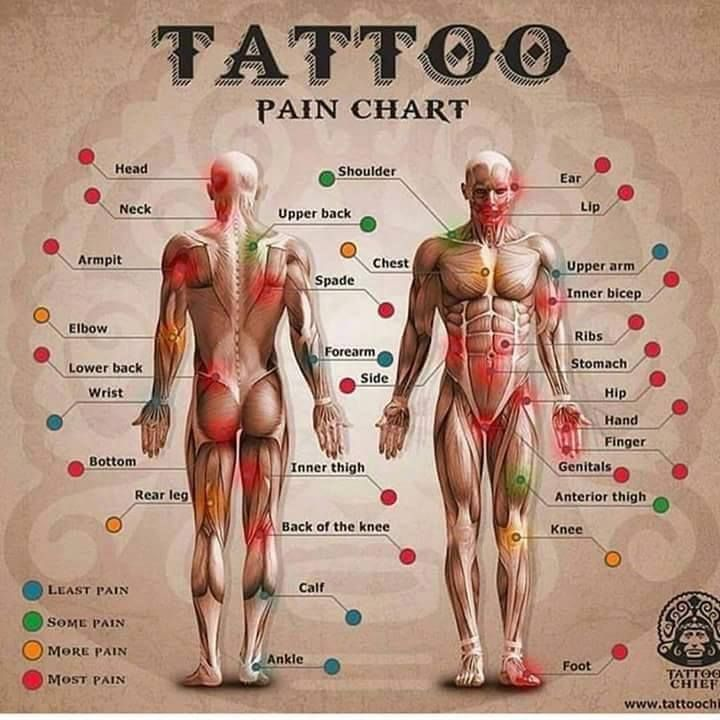 Tattoo pain chart beauty tips for hands tattoos  piercings pinterest and also rh
