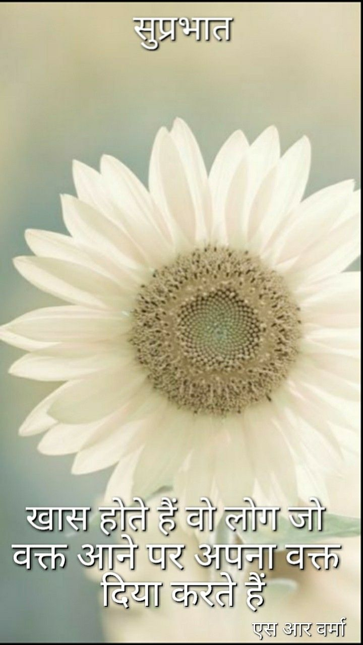 New Quotes About Daisy Flowers