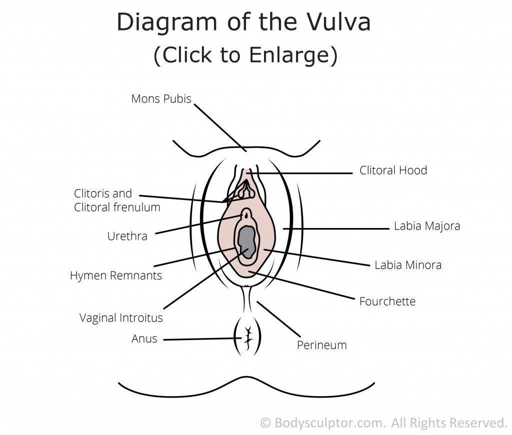 Diagram of Female Genital Plastic Surgery for Mons, Labia Majora ...