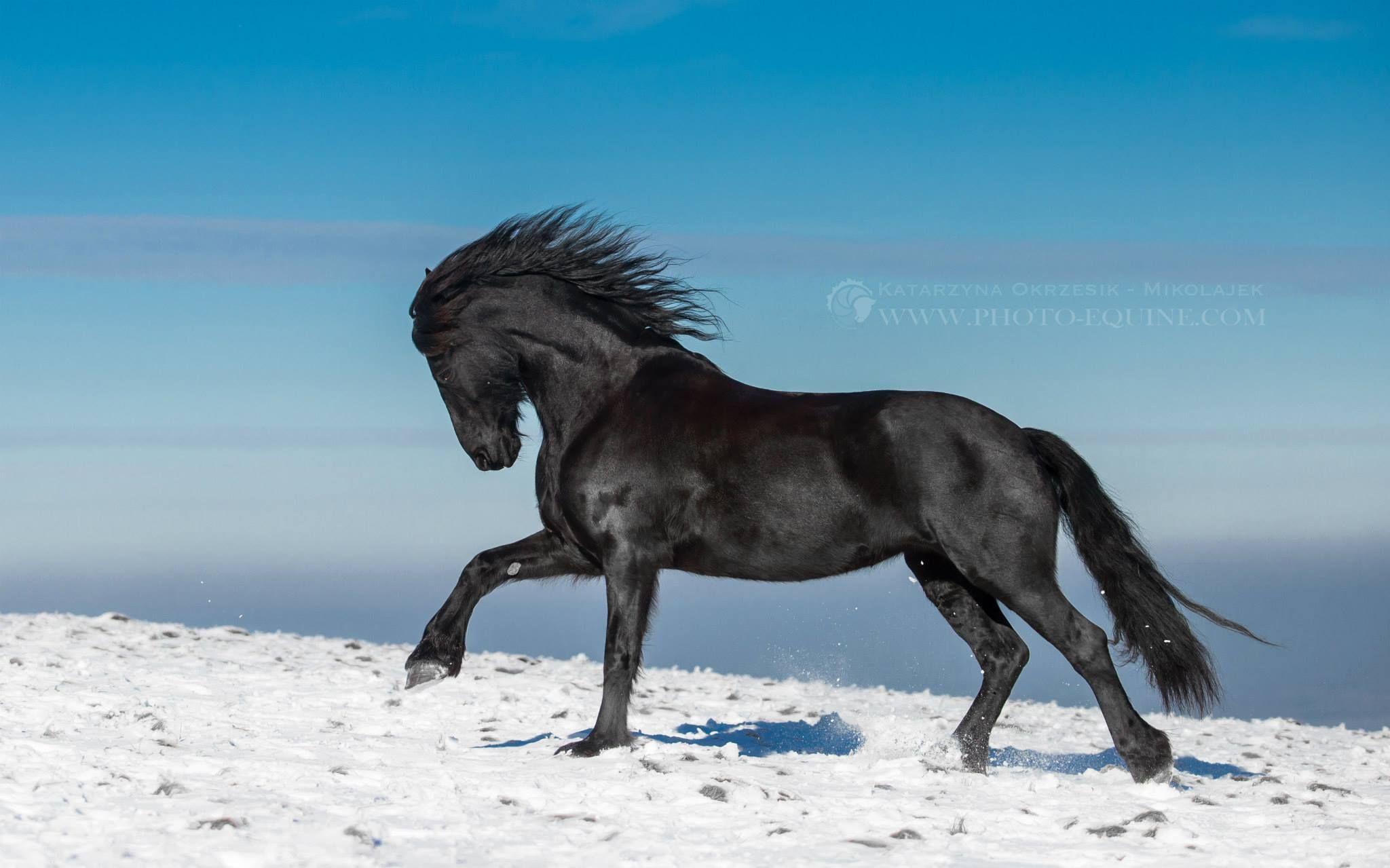 Amazing Wallpaper Horse Snow - eb0d65ee4e124671ffba3f270b5ffb1a  Collection_59871.jpg