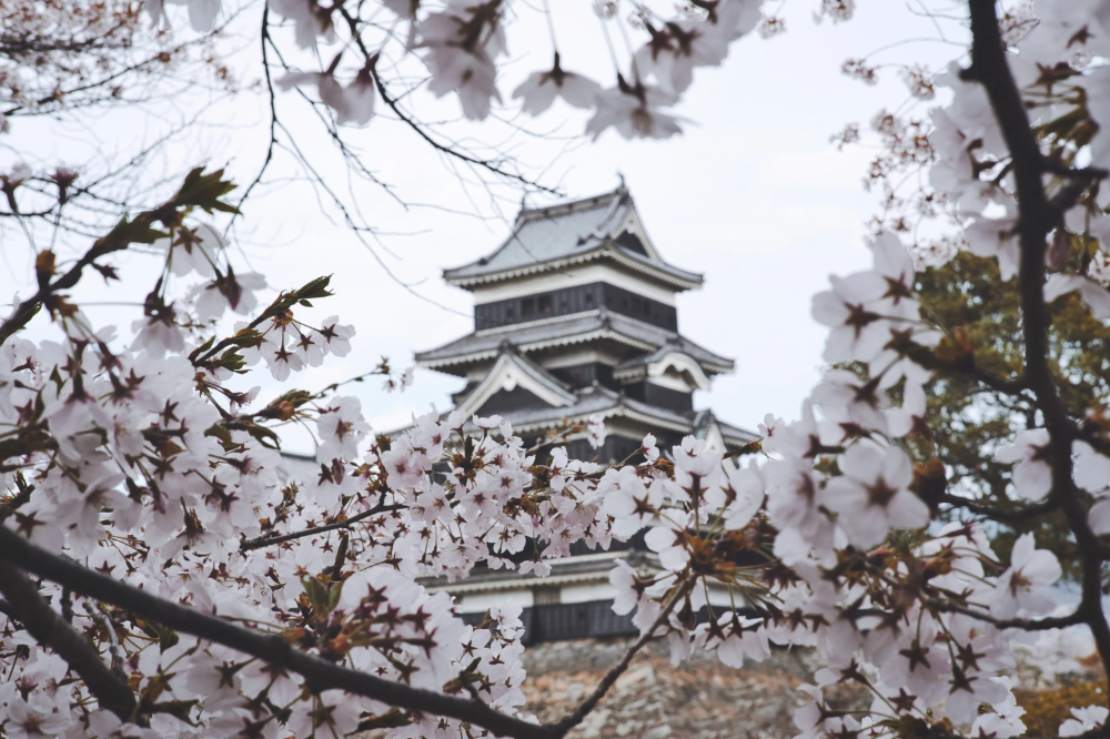 The Ultimate Guide To The Cherry Blossom Festival In Japan 2020 In 2021 Cherry Blossom Japan Japan Cherry Blossom Festival Cherry Blossom Festival