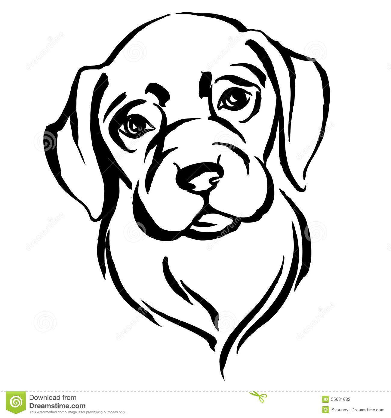 hand drawn portrait of dog labrador stock vector  image