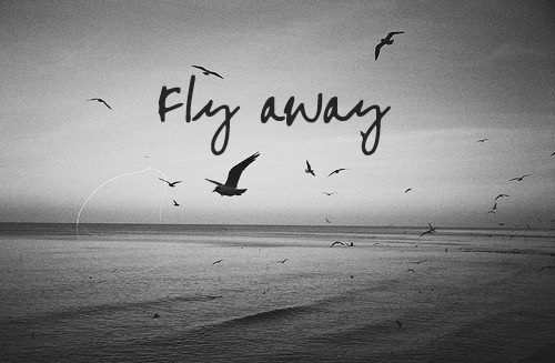 Quotes About Birds Fly Away Quotes  Pinterest  Mottos And Wisdom