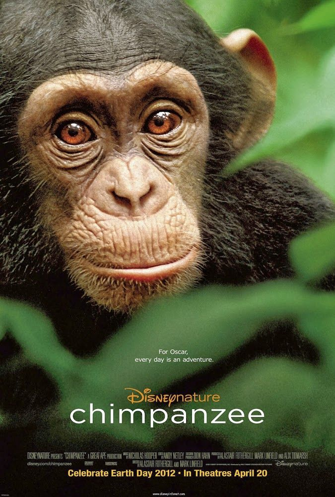 movie chimpanzee 2012 redbox