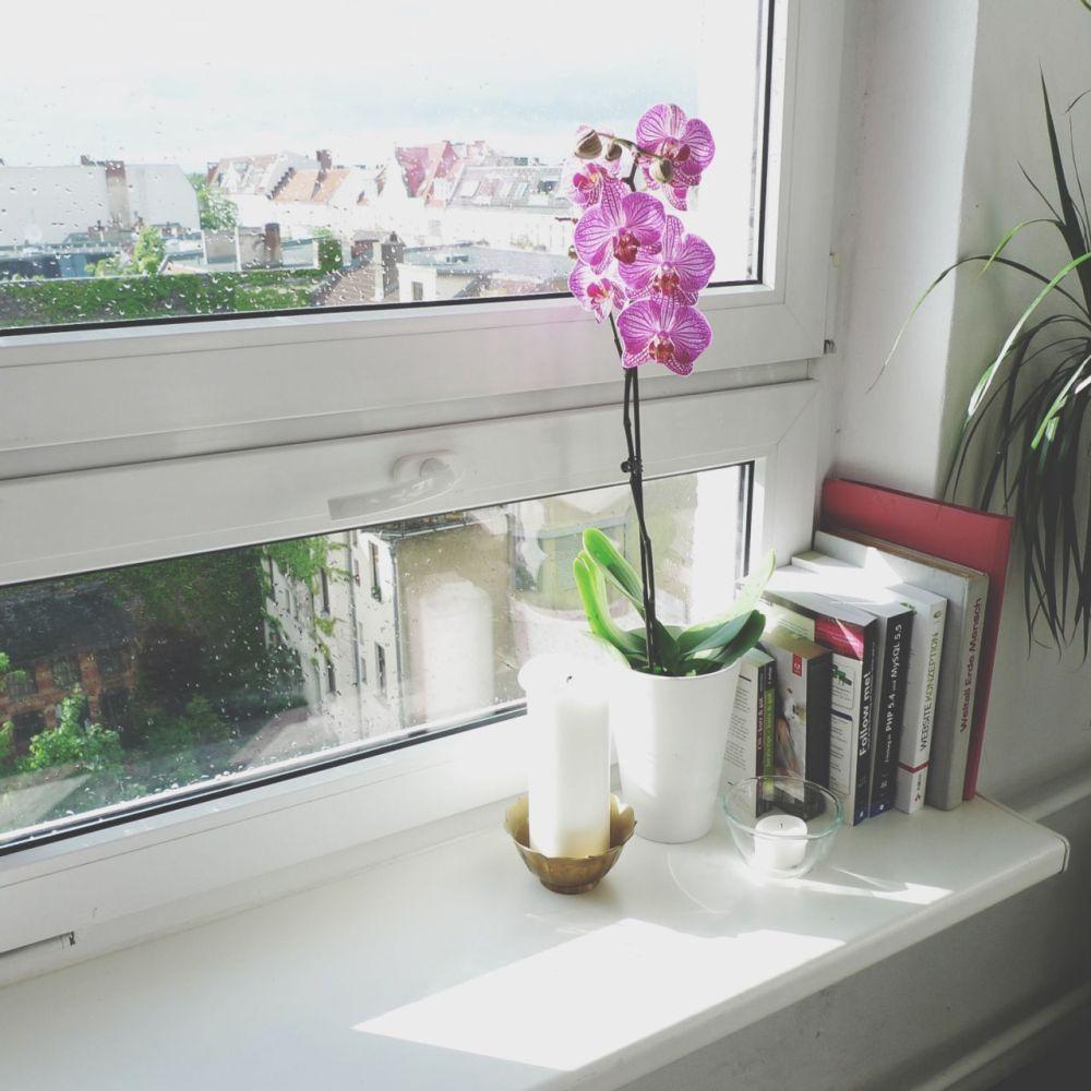 houseplants as home health monitors