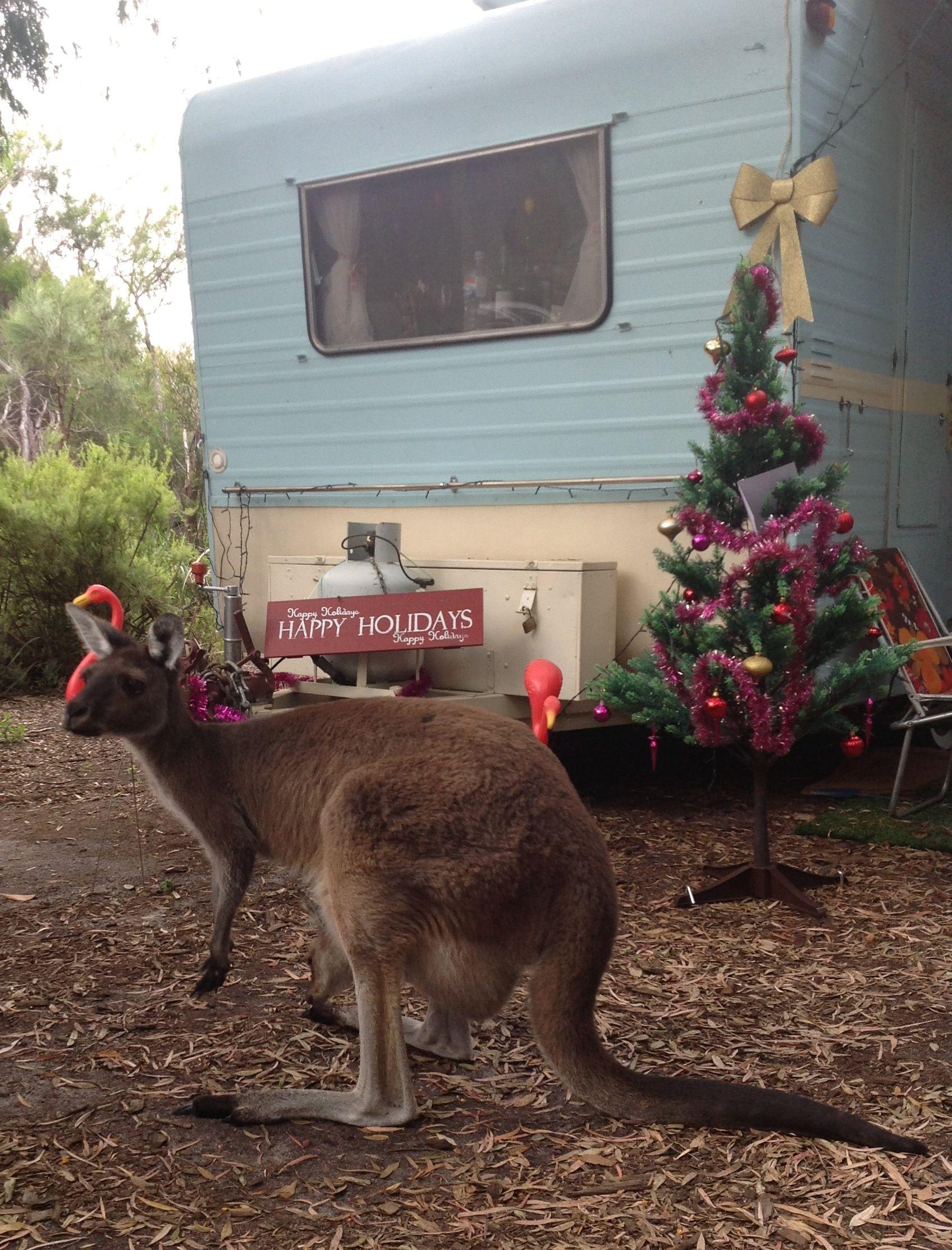 Christmas Camping Australia.Merry Vintage Caravan Kangaroo Christmas From Australia